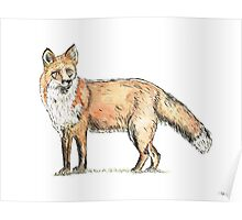 Fox watercolour and ink Poster