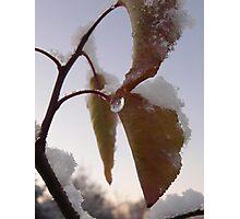 Snow catchers Photographic Print