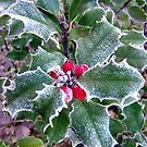 Frosty Holly by CiaoBella