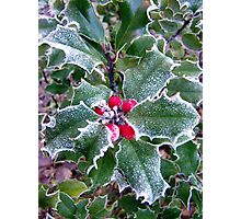 Frosty Holly Photographic Print