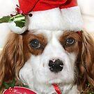 Noah the Christmas Dog by Samantha Cole-Surjan