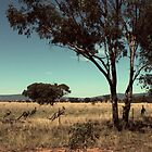 To have a few roos loose in the top paddock: (urban dictionary) by myraj