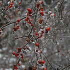 Red Frozen Berries. by Sandy  Tyler