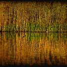 reed bed reflections by Catherine Hadler