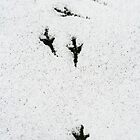 Bird tracks in the snow. by Sandy  Tyler