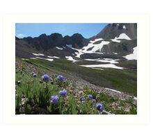 Wildflowers and Maroon Bells Art Print