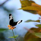 Flowerfairy by mc27