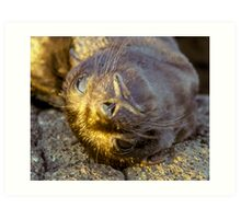Galapagos Newborn Sea Lion Art Print