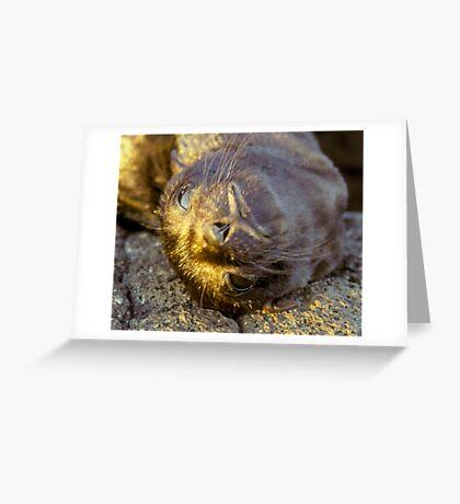 Galapagos Newborn Sea Lion Greeting Card
