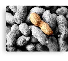 nuts ... Canvas Print