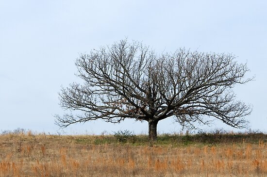 Little Tree on the Prairie by Bonnie T.  Barry
