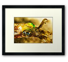 Squid Eye Framed Print
