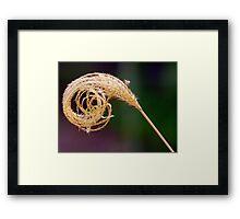 Grass stem Framed Print
