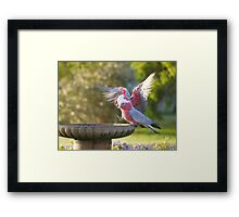 Have you been in yet  ?  What's the water like ? Framed Print