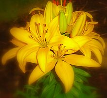 Yellow Lily by Jeff  Burns
