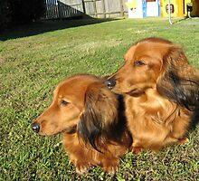 Charlie & Tiffany Dachshunds by SeaMonKeY69