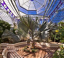 The Palm House by Paul Thompson