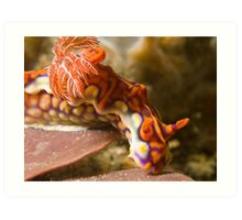 Miamira Magnifica Nudibranch Art Print