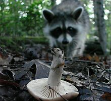 Wild Mushrooming Raccoon by Jean Gregory  Evans