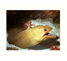 Green Moray Art Print
