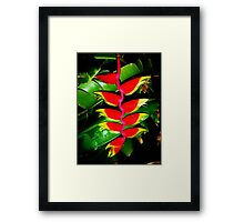 Tropical Touch Framed Print