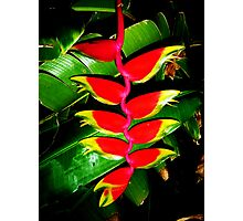 Tropical Touch Photographic Print