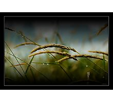 wet grass Photographic Print
