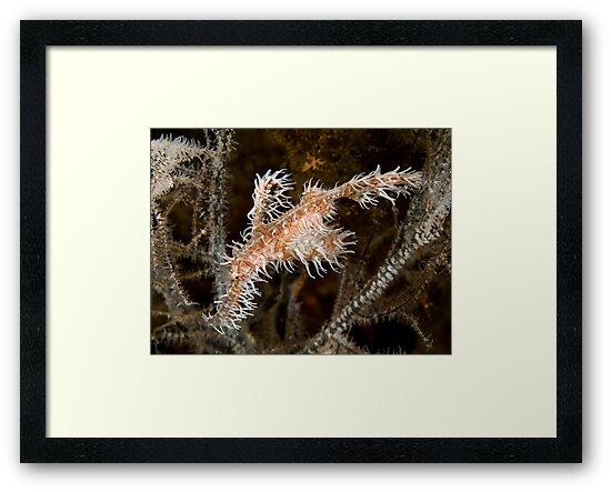 Ornate Ghost Pipefish by Dan Sweeney