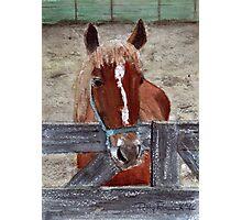 Earl's Horse Photographic Print