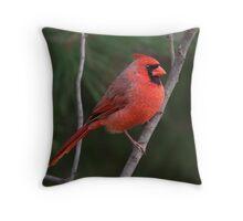 Male Cardinal II Throw Pillow
