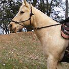 A Beautiful Horse by NancyC
