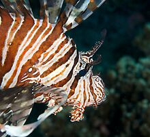 Lionfish by Andrew Trevor-Jones