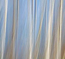 Veiled Forest by Bill Morgenstern