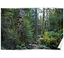 Beech forest walk Poster