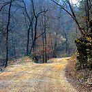 Country Road by NatureGreeting Cards ©ccwri