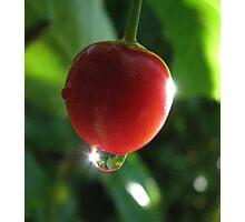 Cherry Berry Photographic Print
