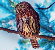 An Owl in Daylight by JoshuaStomberg