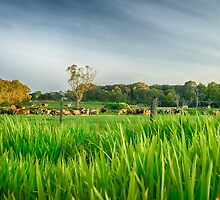 Rural Gippsland by Shari Mattox