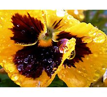 Petal Droplets Photographic Print
