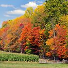 Autumn Trees and Cornfield by Kenneth Keifer