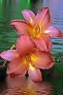 Pink lillis in the water  by LudaNayvelt