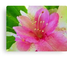 Soft Pink and White Flora Canvas Print