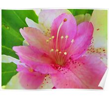 Soft Pink and White Flora Poster