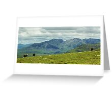 The Sheep Near The Top Of England Greeting Card