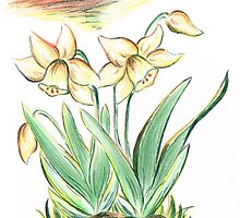 Glorious Daffodils by Teresa White