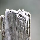 Fence Post in the Frost by Pamela Jayne Smith
