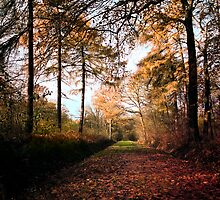 Path by Dirk Delbaere