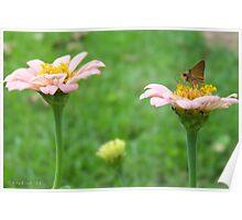 Pink Flower Sundae Poster