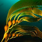 Kelp Banner by George Cathcart