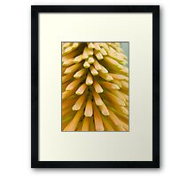 Red-Hot Poker  Framed Print